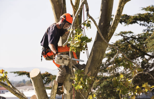 Man doing some tree cutting services for tree removal in lebanon pa